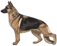 Saddleback Black and Tan German Shepherd Dog