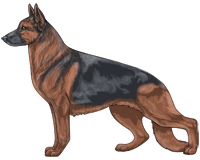 Saddleback Blue and Red German Shepherd Dog