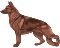 Saddleback Liver and Red German Shepherd Dog