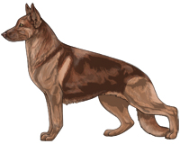 Saddleback Liver and Tan German Shepherd Dog
