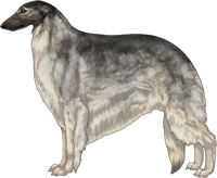 Silver Sable with Black Mask Borzoi