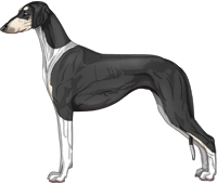 Black & Silver Irish Smooth Saluki