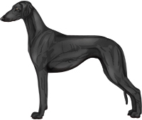 Black Smooth Saluki