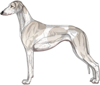 Silver Parti Smooth Saluki