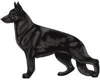 Solid Black and Red German Shepherd Dog