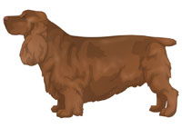 Golden Liver Sussex Spaniel