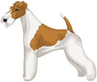 White and Tan Wire Fox Terrier
