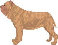 Tawny Brindle Neapolitan Mastiff