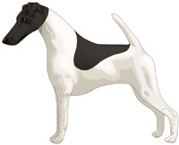 White & Black Smooth Fox Terrier
