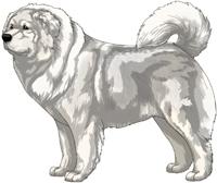 White Caucasian Mountain Dog