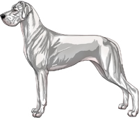 White Great Dane