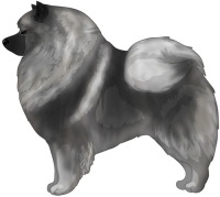 Wolfgray and Black Keeshond