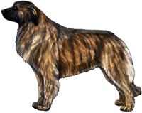 Yellow Brindle Estrela Mountain Dog