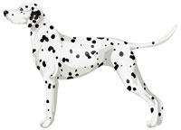White & Black Dalmatian