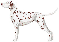 White & Liver Brown Dalmatian