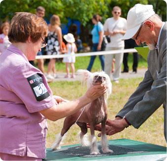 Showdog com Dog Show Game